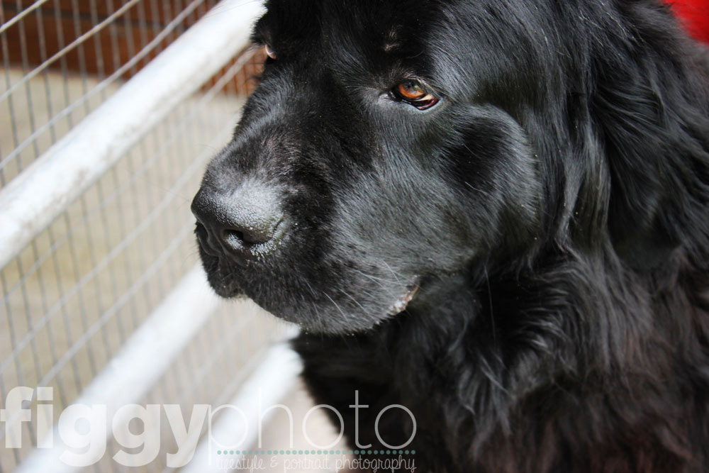 Elly - Pet Portrait Photographer At Home Photography